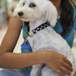 Maxi Zoo : votre animalerie Montpellier pour graver la médaille de votre chien